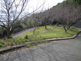 いろは坂の写真です。